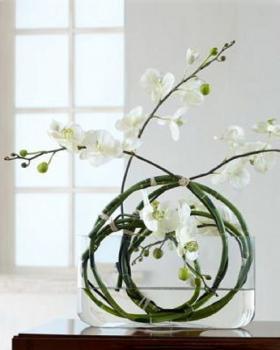 Использование орхидей идеи
