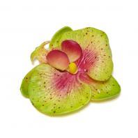Зеленые орхидеи для украшения