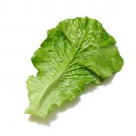 Искусственные листья салата