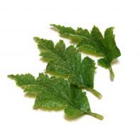 Листья мака с ворсинками