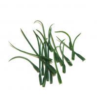 Основа для изготовления листьев цветка
