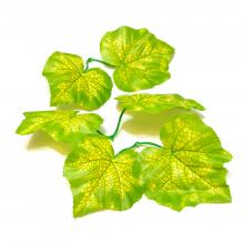 Листья виноградные