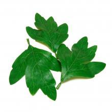 Искусственные листья набор