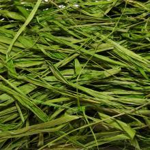 Рафия насыщенный зеленый