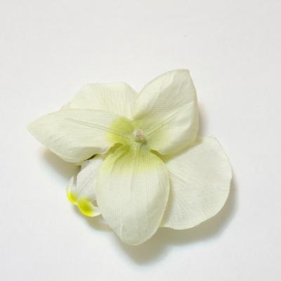 Головка орхидеи перевернутая