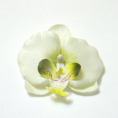 Орхидея головка белая