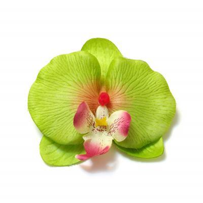 Головка зеленой орхидеи натуральная