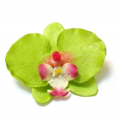 Орхидея зеленая головка
