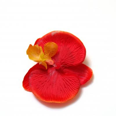 Головки орхидей купить интернет магазин