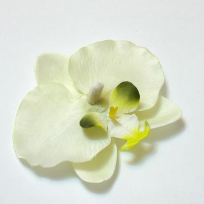 Головки орхидей недорого