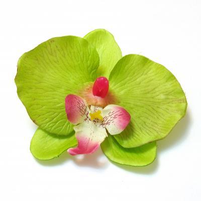 Головка орхидеи интернет-магазин