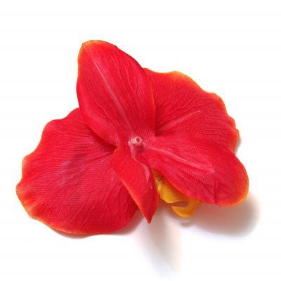 Головка красной орхидеи обратная сторона