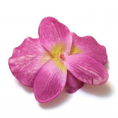 Обратная сторона головки цветка