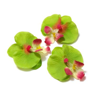 Головка орхидеи зеленая
