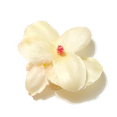Головка орхидеи кремовая