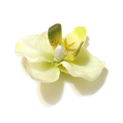 Красивые головки орхидей