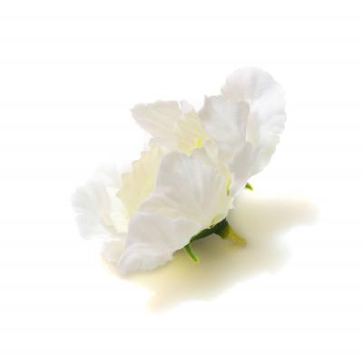 Головка цветка белая вид сбоку