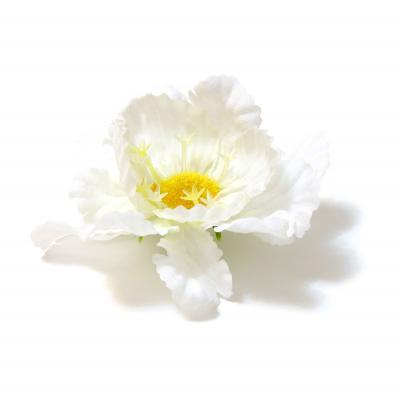 Головки цветов белые
