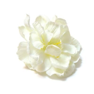 Головки цветов белые сакура