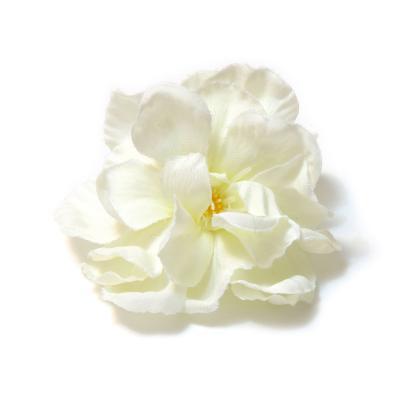 Головки цветов яблони белые пышные