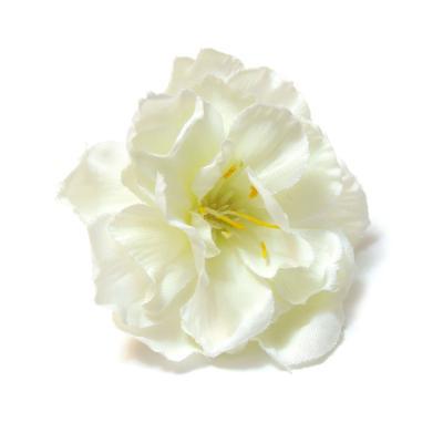Яблоневый цвет белая головка