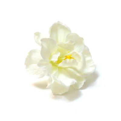 Яблоневый цвет белый