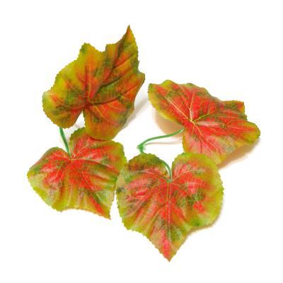 Листья дикого винограда