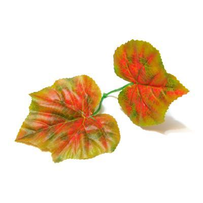 Виноград дикий листья
