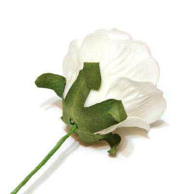 Роза белая латекс с обратной стороны