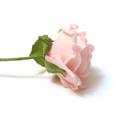 Розовая роза вид сбоку