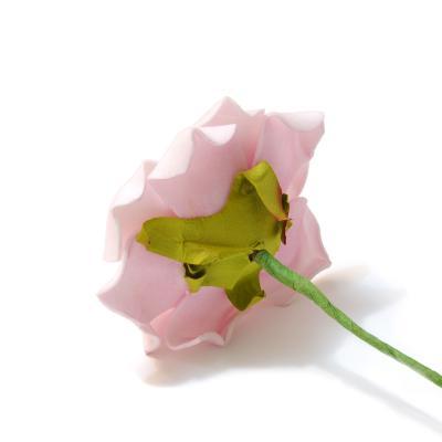 Головка розы розовая красивая