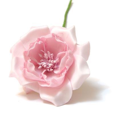 Головки цветов розовые
