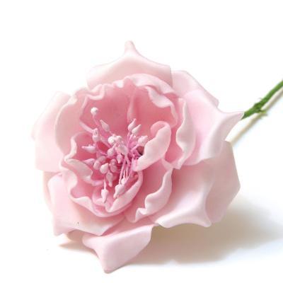 Роза красивая