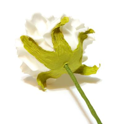 Кремовые розы