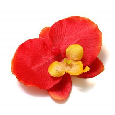Большая головка орхидеи красная