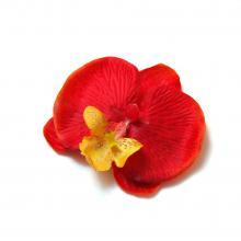 Маленькая головка красной орхидеи