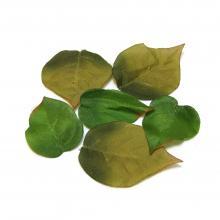 Листья набор