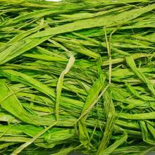 Рафия ярко-зеленая