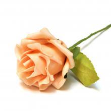 Персиковая свадебная роза