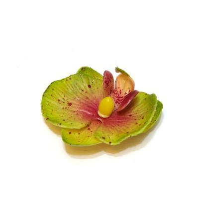 Головка маленькая орхидея