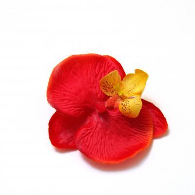 Красная головка орхидеи маленькая