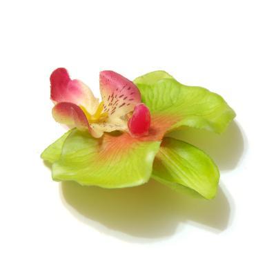 Зеленые головки орхидей