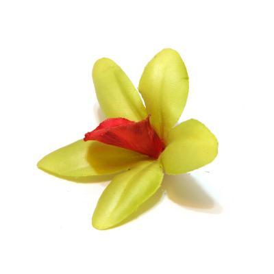 Головки орхидей оптом