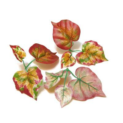 Листья виноградные коричневые
