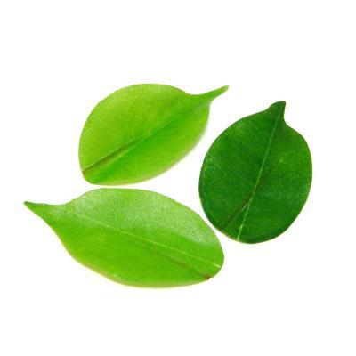 Листья фикуса из ткани