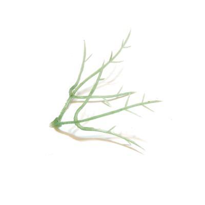 Основа для листьев