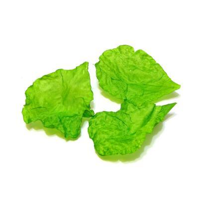 Лепестки зеленые нежные