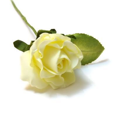 Головки кремовых роз красивые