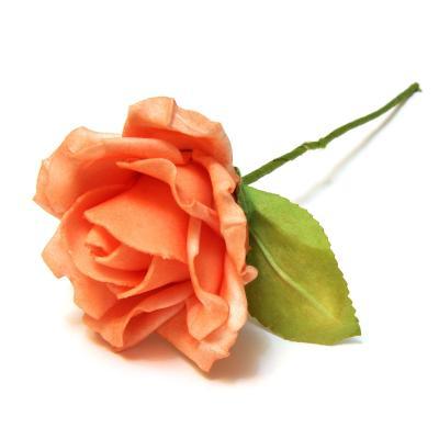 Роза головка красивая