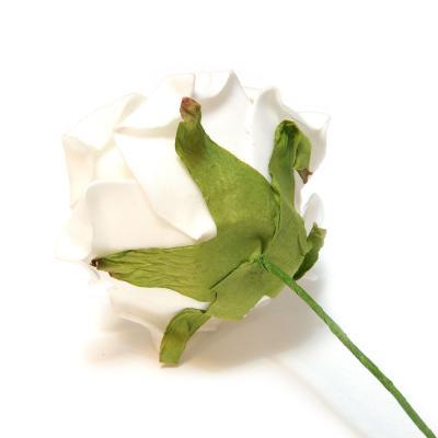 Роза обратная сторона